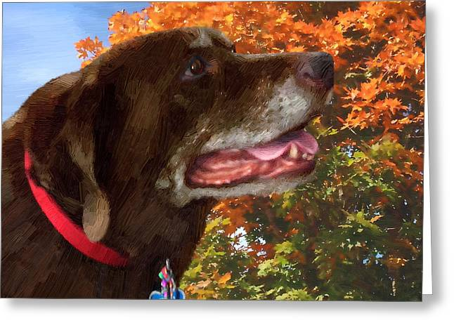 Chocolate Lab Greeting Cards - Bear - Bear Greeting Card by Doug Kreuger