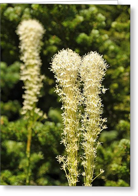 Bear Grass Greeting Card by Bruce Gourley