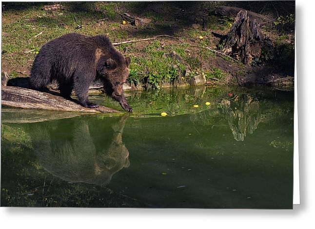 Swiss Photographs Greeting Cards - Bear in Mind Greeting Card by Liran Eisenberg