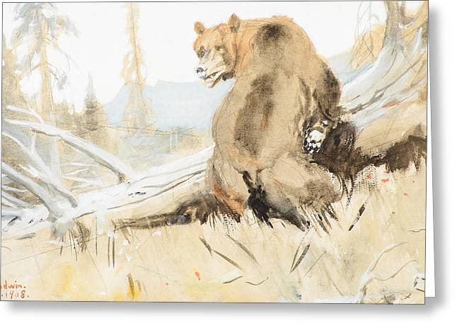 Philip Goodwin Greeting Cards - Bear  Greeting Card by Celestial Images