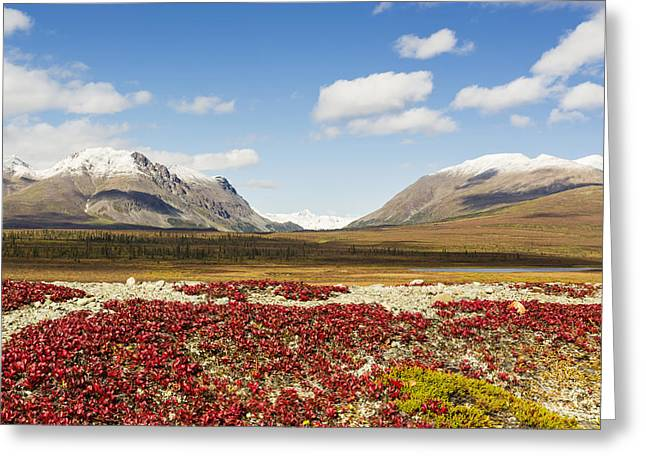 Southcentral Alaska Greeting Cards - Bearberry Leaves In The Foreground Greeting Card by Ray Bulson