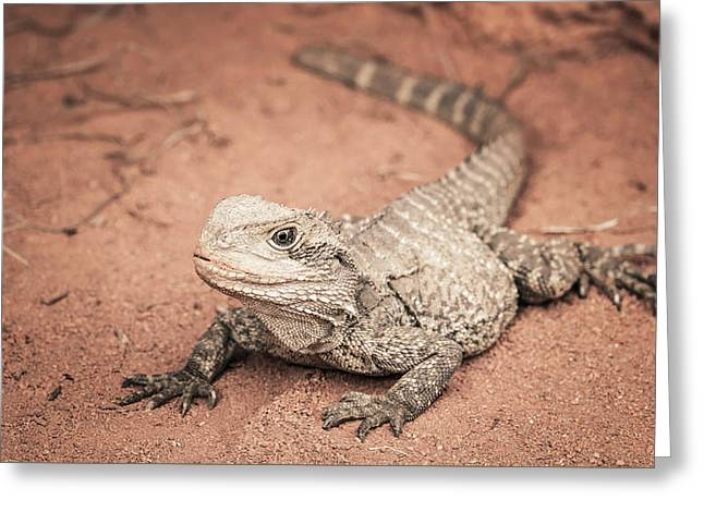 Carnivorous Greeting Cards - Bearded Dragon Lizard Greeting Card by Wim Lanclus