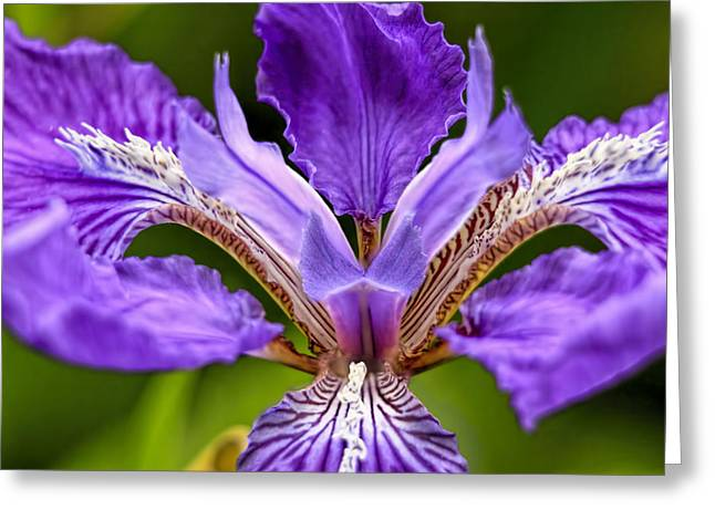 Popular Art Greeting Cards - Bearded Iris Greeting Card by Geraldine Scull