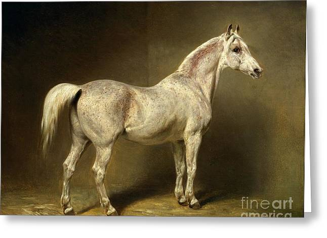 Saddle Greeting Cards - Beatrice Greeting Card by Carl Constantin Steffeck