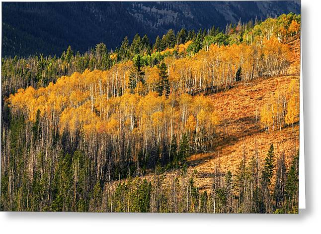 Aspens In Fall Greeting Cards - Beautiful autumn aspen trees creating sea of gold in Stanley Idaho USA Greeting Card by Vishwanath Bhat