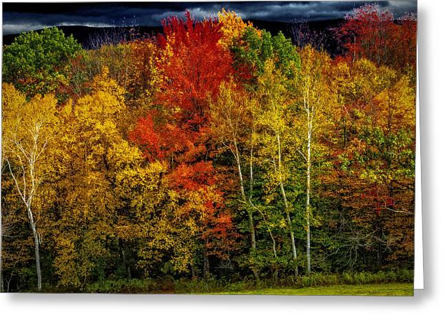 Beautiful Autumn Colors Greeting Card by Garry Gay