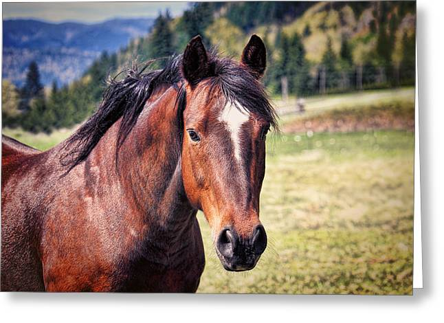 Horses In Nature Greeting Cards - Beautiful Bay Horse In Pasture Greeting Card by Tracie Kaska