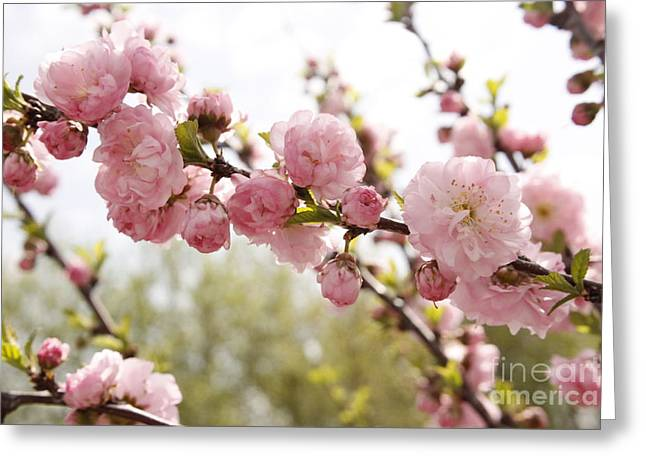 Springy Greeting Cards - Beautiful Blossoms Greeting Card by Melanie Grass