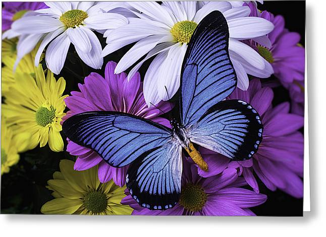Gerbera Greeting Cards - Beautiful Blue Wings Greeting Card by Garry Gay