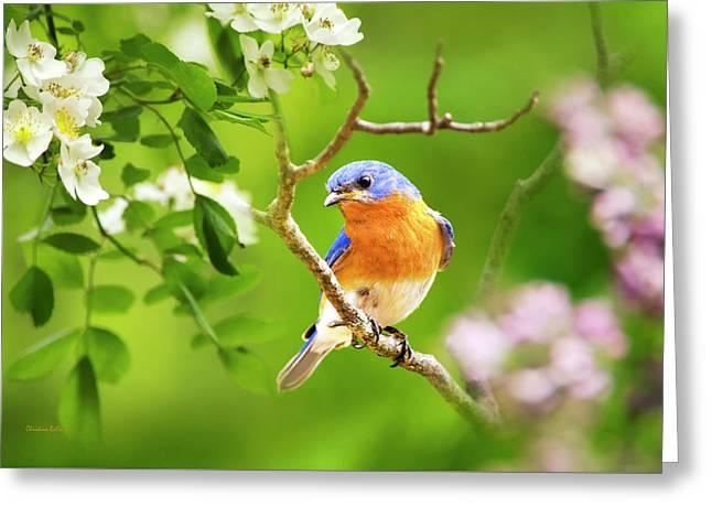 Beautiful Bluebird Greeting Card by Christina Rollo