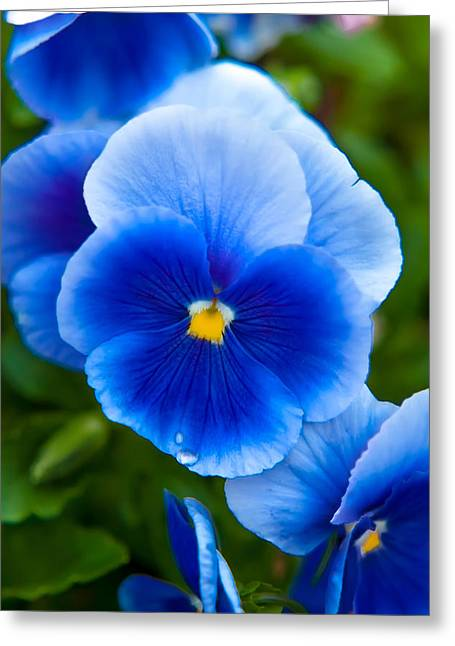 Colorful Greeting Cards - Beautiful Blues Greeting Card by Az Jackson