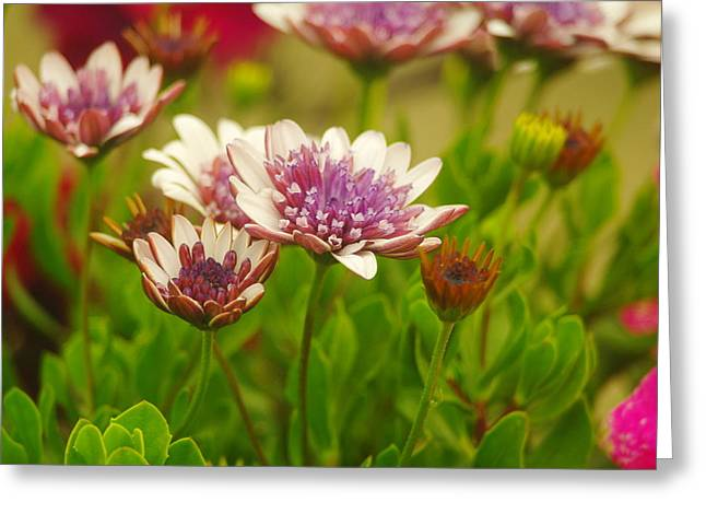 Living Things Greeting Cards - Beautiful Boquet Greeting Card by Jeff  Swan