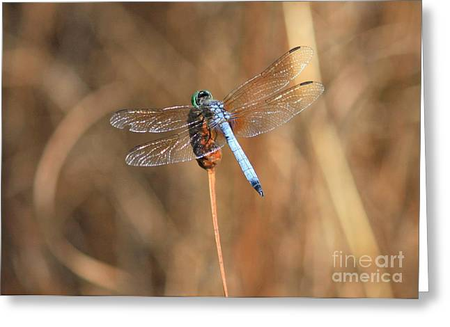 Blue And Brown Greeting Cards - Beautiful Broken Wing Greeting Card by Carol Groenen
