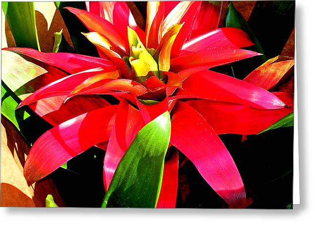 Abstract Digital Photographs Greeting Cards - Beautiful Bromeliad Greeting Card by Elizabeth Hoskinson