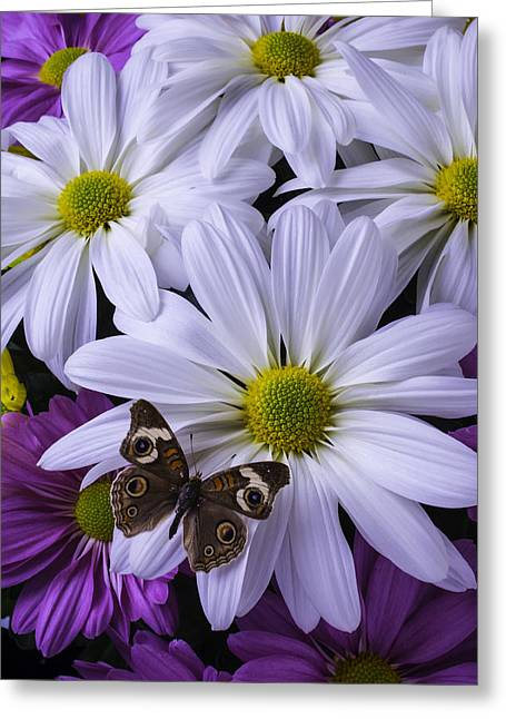 Gerbera Daisies Greeting Cards - Beautiful Brown Butterfly Greeting Card by Garry Gay