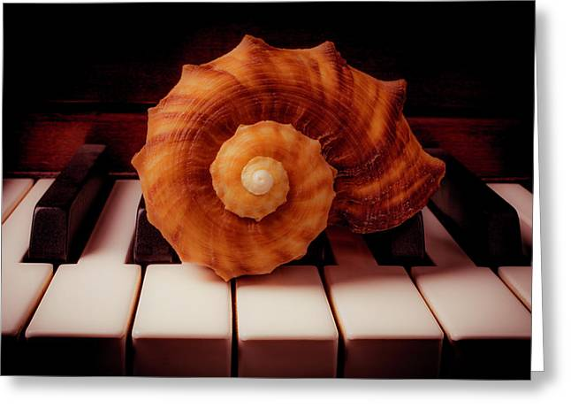 Beautiful Brown Shell Greeting Card by Garry Gay