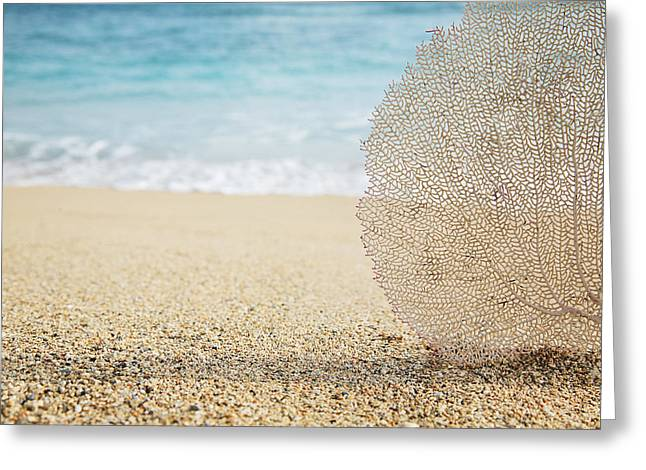 Ashore Greeting Cards - Beautiful Coral Element 1 Greeting Card by Brandon Tabiolo - Printscapes