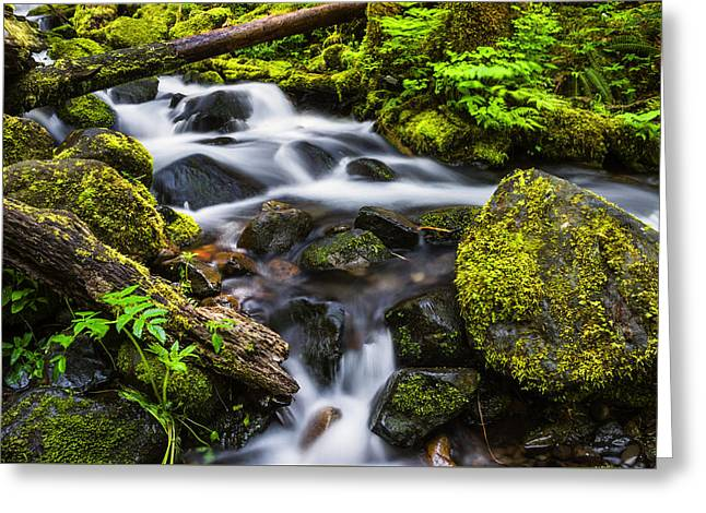 Moss Greeting Cards - Beautiful Creek in Columbia River Gorge Oregon Greeting Card by Vishwanath Bhat