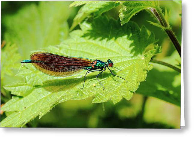Demoiselles Greeting Cards - Beautiful Demoiselle Greeting Card by Rumyana Whitcher