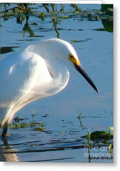 Water Fowl Greeting Cards - Beautiful Egret Greeting Card by Gina Welch