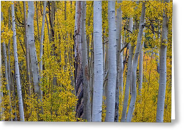 Independance Greeting Cards - Beautiful Fall Forest Greeting Card by James BO  Insogna