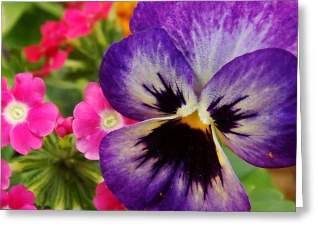 Historic Home Greeting Cards - Beautiful Flowers Greeting Card by Ilija Markovski