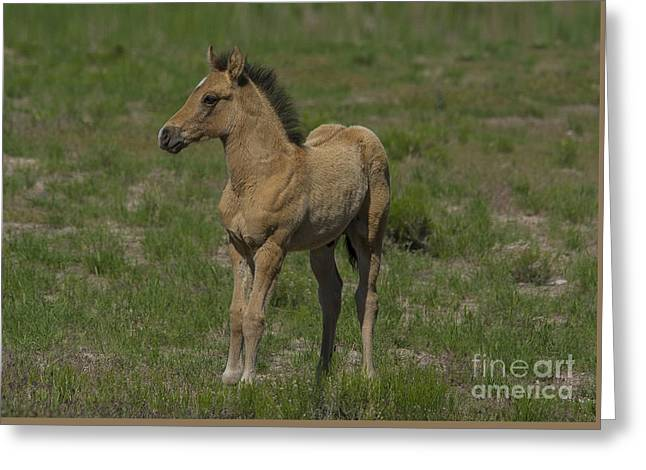 Wild Horse Pyrography Greeting Cards - Beautiful Foal  Greeting Card by Nicole Markmann Nelson