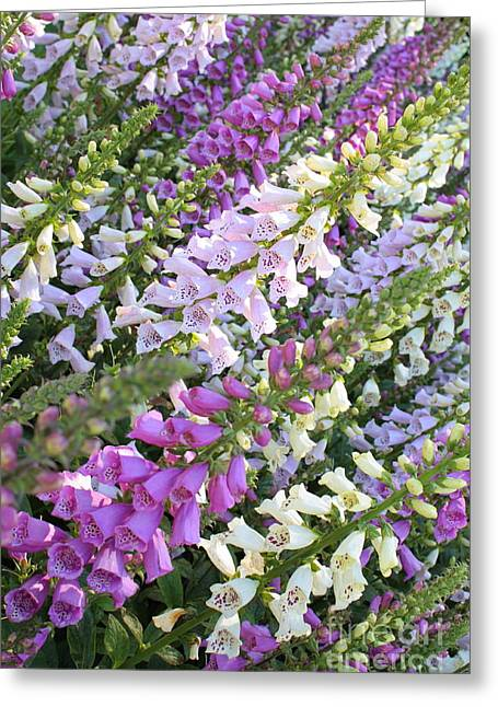 Beautiful Foxglove Greeting Card by Carol Groenen