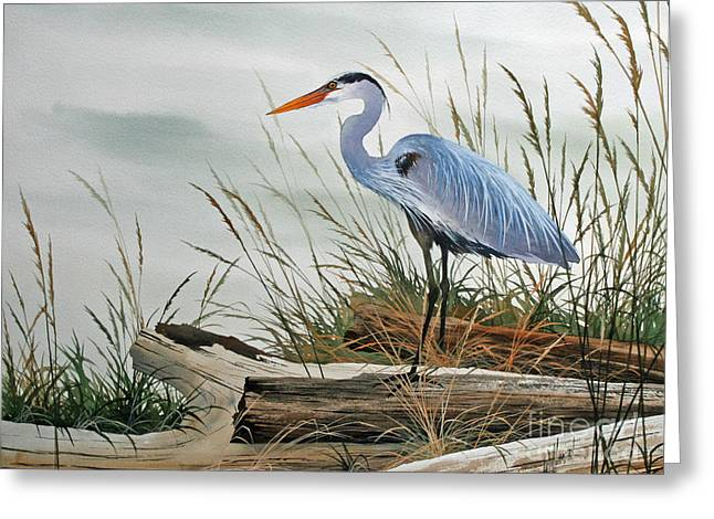 Framed Print Greeting Cards - Beautiful Heron Shore Greeting Card by James Williamson