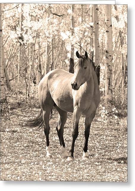 Beautiful Horse In Sepia Greeting Card by James BO  Insogna