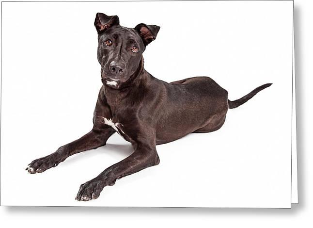 Beautiful Large Labrador Retriever Crossbreed Dog Greeting Card by Susan  Schmitz