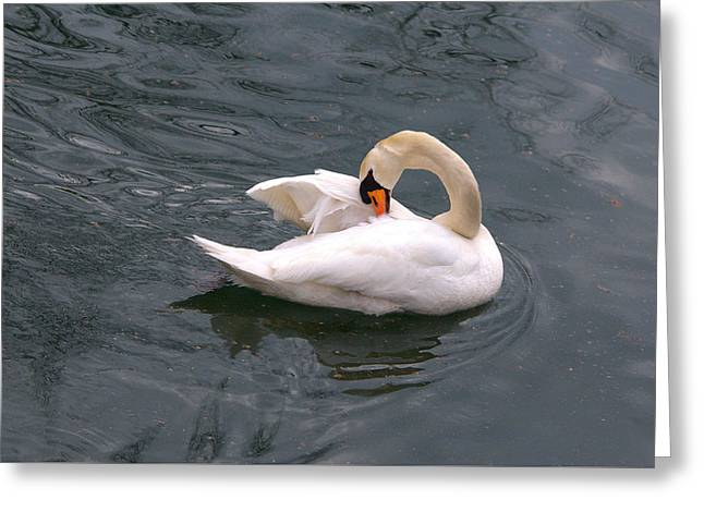 Hunting Bird Greeting Cards - Beautiful Mute Swan Surrounded By Clutter Greeting Card by Roy Williams