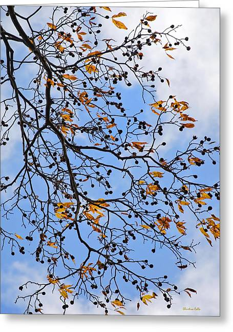 Nut Trees Greeting Cards - Beautiful Ornate Tree Hickory Against Blue Sky Greeting Card by Christina Rollo
