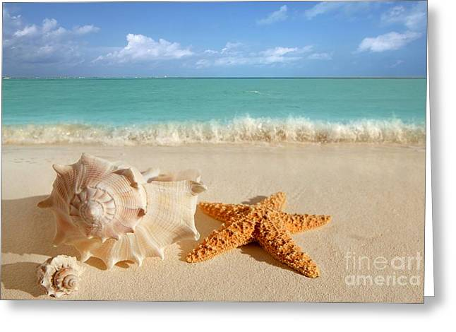 Seashell Pyrography Greeting Cards - Beautiful Shell on Sand Greeting Card by Boon Mee