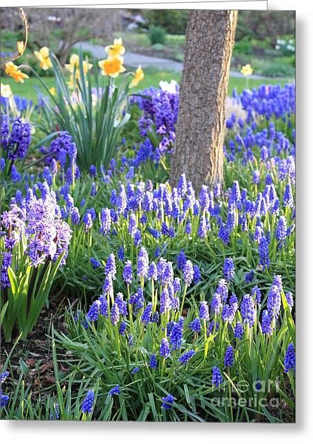 Sunlight On Flowers Greeting Cards - Beautiful Spring Day Greeting Card by Carol Groenen