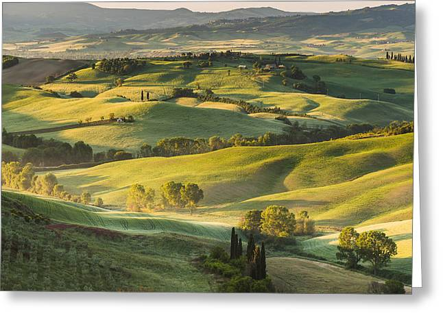 Olives Pyrography Greeting Cards - Beautiful summer landscape in the light of the rising sun. Greeting Card by Jaroslaw Pawlak