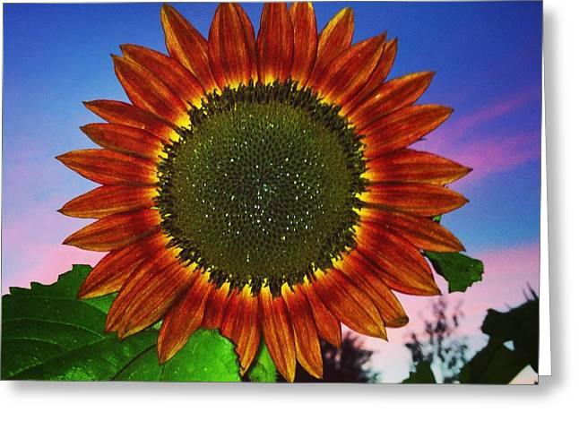 Beautiful Sunflower On The Night Sky Background Greeting Card by Polina Brener