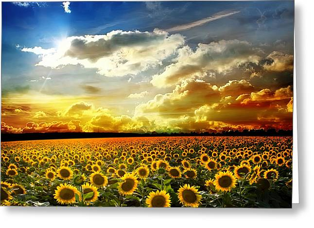 Beautiful Sunset Over A Field With Podsolnuzami Greeting Card by Caio Caldas