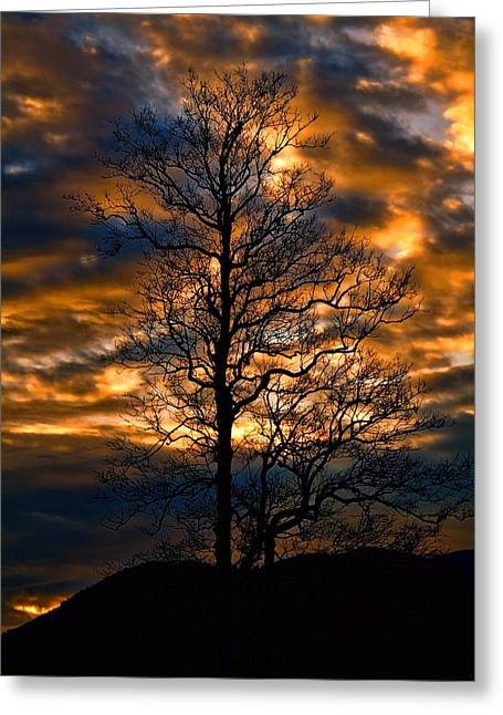 Beautiful Sunset Tree Silhouette Greeting Card by Dan Sproul