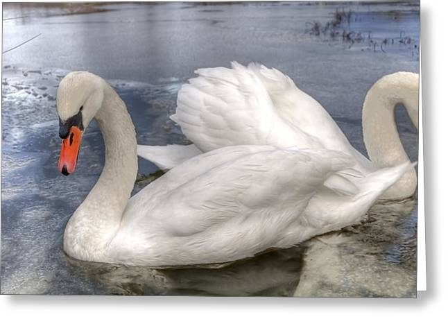 White Swan Greeting Cards - Beautiful Swans Greeting Card by Svetlana Sewell