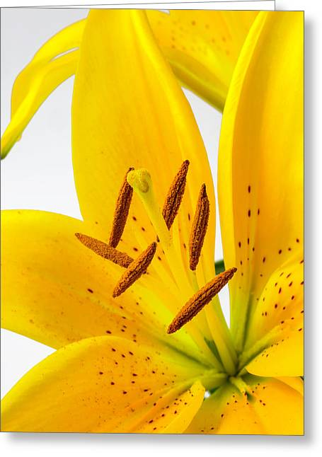 Beautiful Tiger Lily Greeting Card by Garry Gay