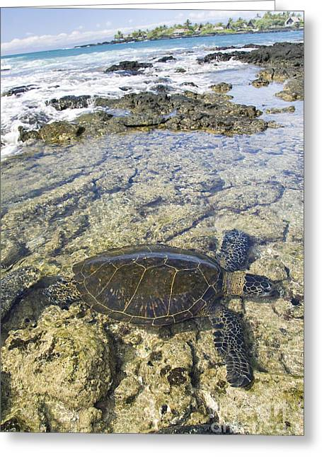 Animal Wisdom Greeting Cards - Beautiful Turtle Greeting Card by Dave Fleetham - Printscapes