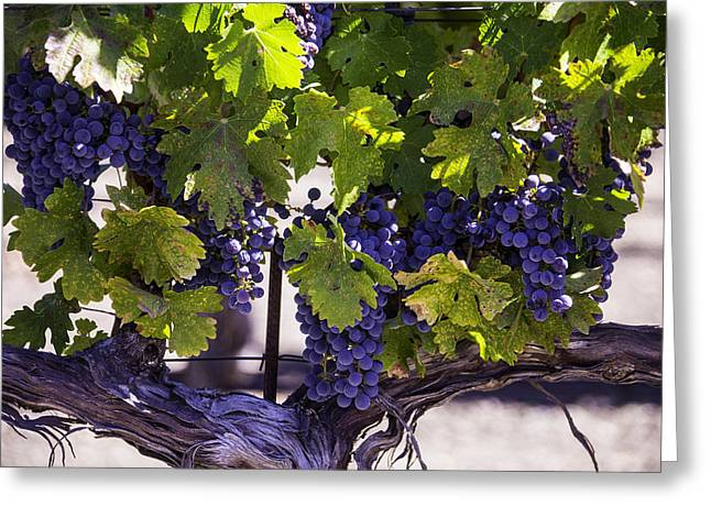 Grapevine Greeting Cards - Beautiful Vineyards Greeting Card by Garry Gay