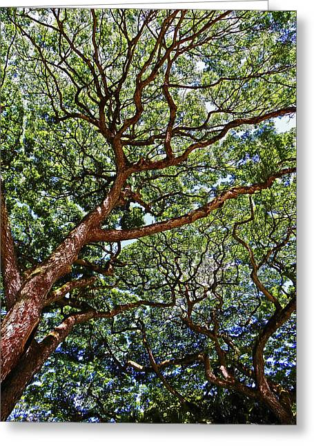 North Shore Greeting Cards - Beautiful Waimea Trees Greeting Card by Elizabeth Hoskinson