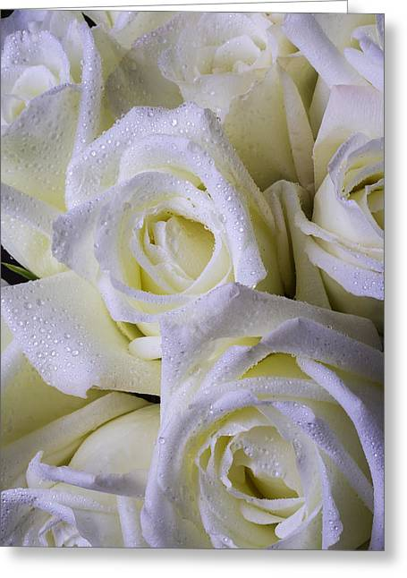 Seasonal Bloom Greeting Cards - Beautiful White Roses Greeting Card by Garry Gay