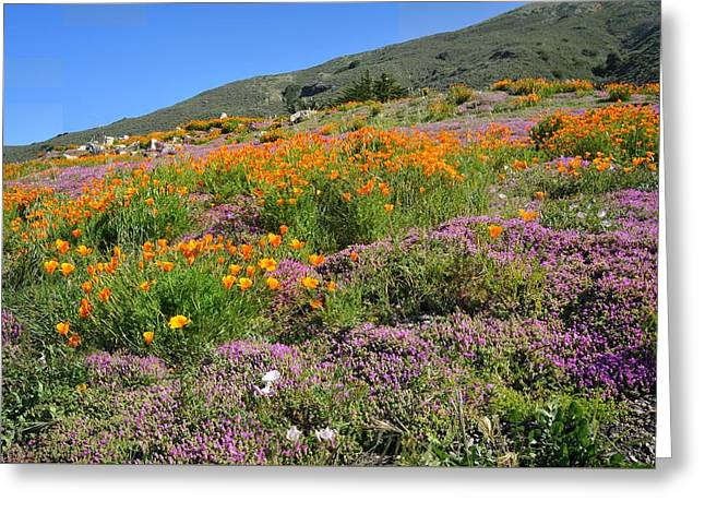Beautiful Wildflowers Along Pch Greeting Card by Lynn Bauer