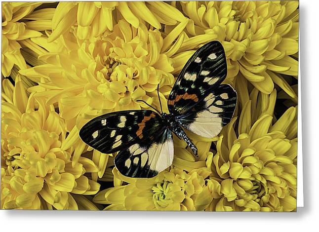 Mum Greeting Cards - Beautiful Wings On Yellow Mums Greeting Card by Garry Gay