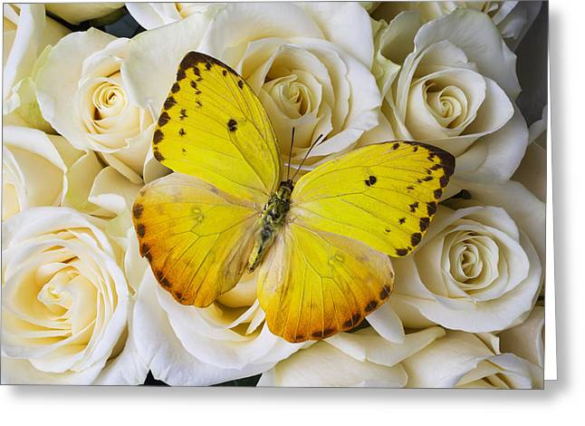 Beautiful Yellow Butterfly On Roses Greeting Card by Garry Gay