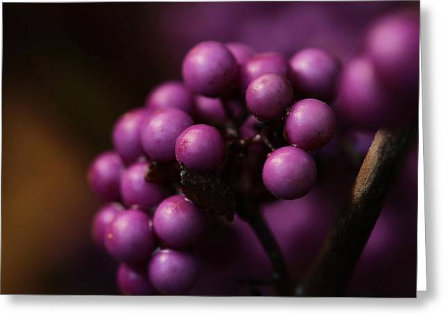 Beauty Berries  Greeting Card by Connie Handscomb
