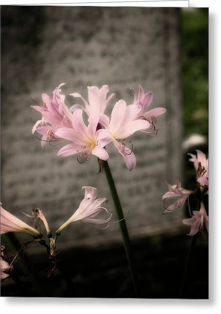 Soft Petals Greeting Cards - Beauty in Death Greeting Card by Michelle Sheppard